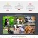 Website Design for Asheville Dog Company